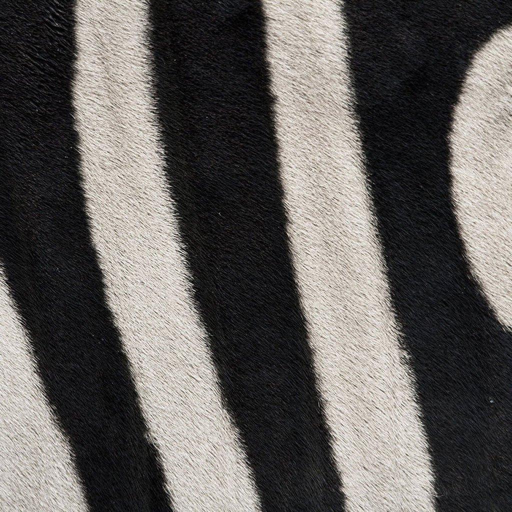closeup-photographs-of-animal-skin-zebra